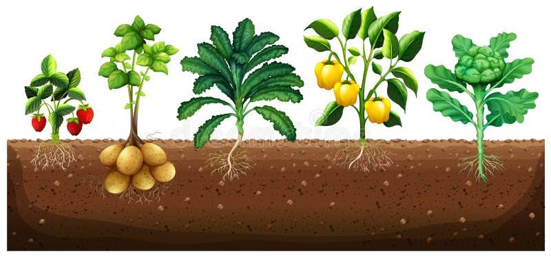 Πολλά είδη λαχανικών που φυτεύουν στο έδαφος ελεύθερη απεικόνιση δικαιώματος