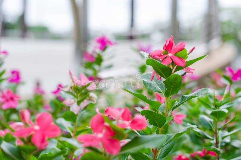 Πολλά λουλούδια ακμάζουν στοκ εικόνα