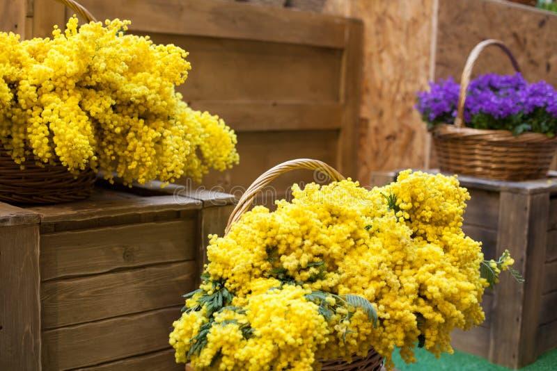 Πολλά λουλούδια στην κίτρινη πορφύρα καλαθιών στοκ εικόνα με δικαίωμα ελεύθερης χρήσης