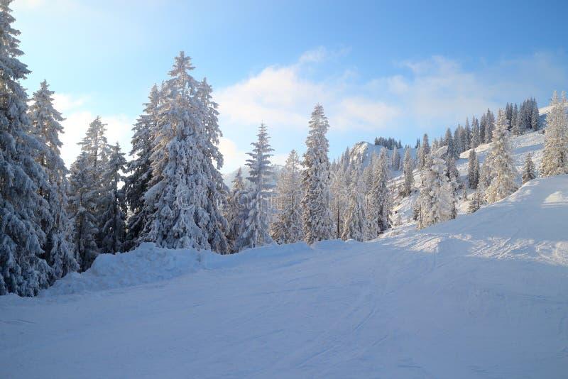 Πολλά χιονισμένα δέντρα στοκ φωτογραφία με δικαίωμα ελεύθερης χρήσης