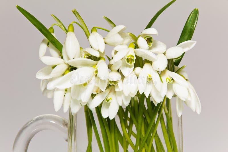 Δέσμη των snowdrops vase γυαλιού που απομονώνονται στο άσπρο υπόβαθρο στοκ εικόνες