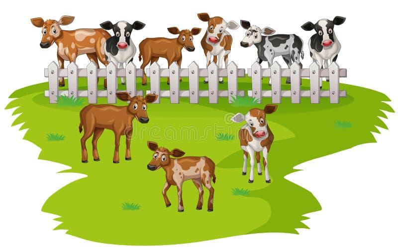Πολλές αγελάδες στην αυλή απεικόνιση αποθεμάτων