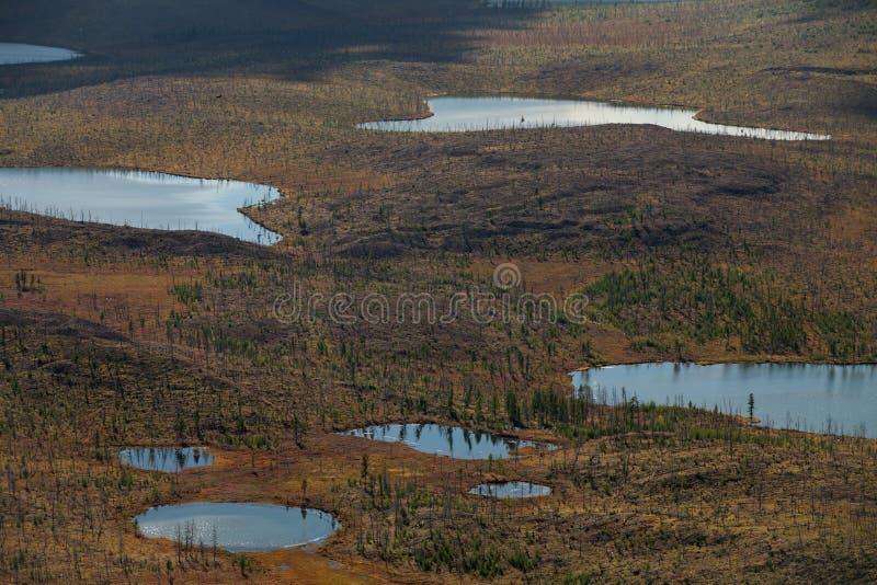 Πολλές μικρές λίμνες και taiga νεκρές στοκ εικόνες