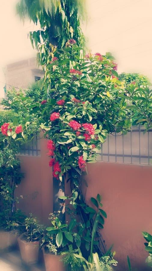Πολλή δέσμη των λουλουδιών στις εγκαταστάσεις στοκ εικόνες