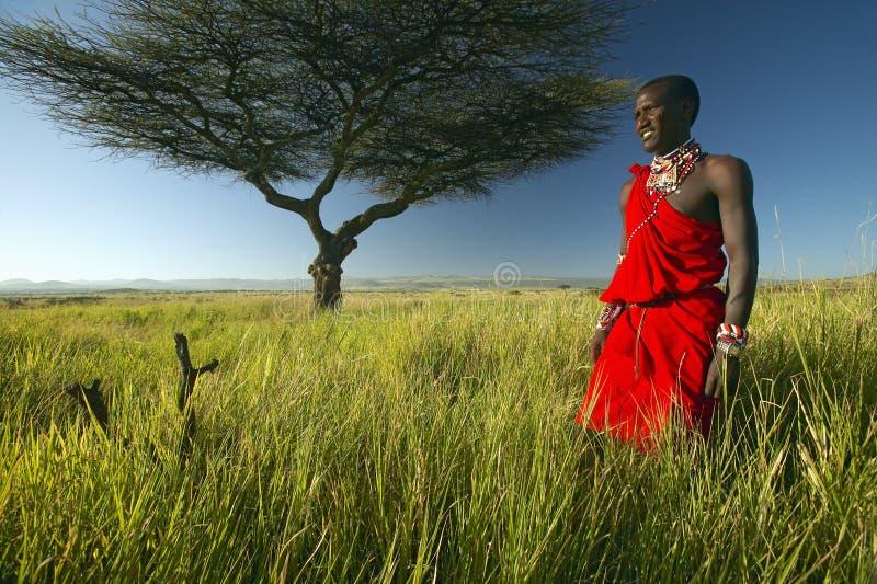 Πολεμιστής Masai στο κόκκινο που στέκεται κοντά στο δέντρο ακακιών και το τοπίο έρευνας της συντήρησης Lewa, Κένυα Αφρική στοκ εικόνα με δικαίωμα ελεύθερης χρήσης