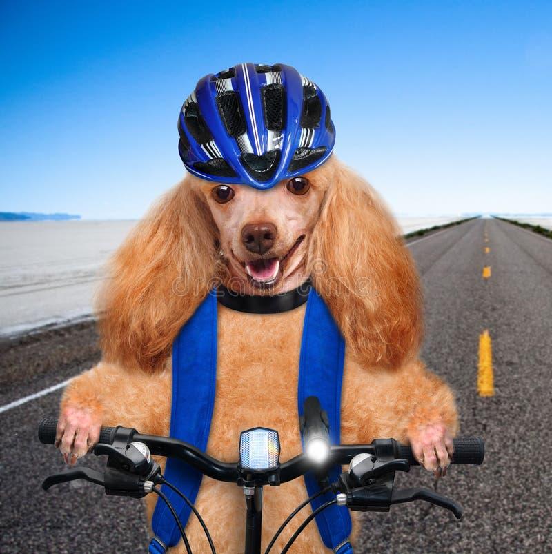 Ποδηλάτης σκυλιών στοκ φωτογραφία με δικαίωμα ελεύθερης χρήσης