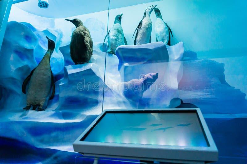 Πολική επίδειξη στο μουσείο φυσικής ιστορίας στοκ φωτογραφίες