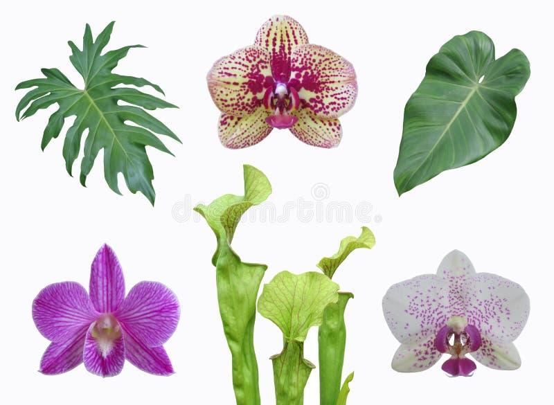 Πολλοί απομόνωσαν τα φύλλα φυτών ζουγκλών και ανθίζουν το κολάζ στοκ φωτογραφίες