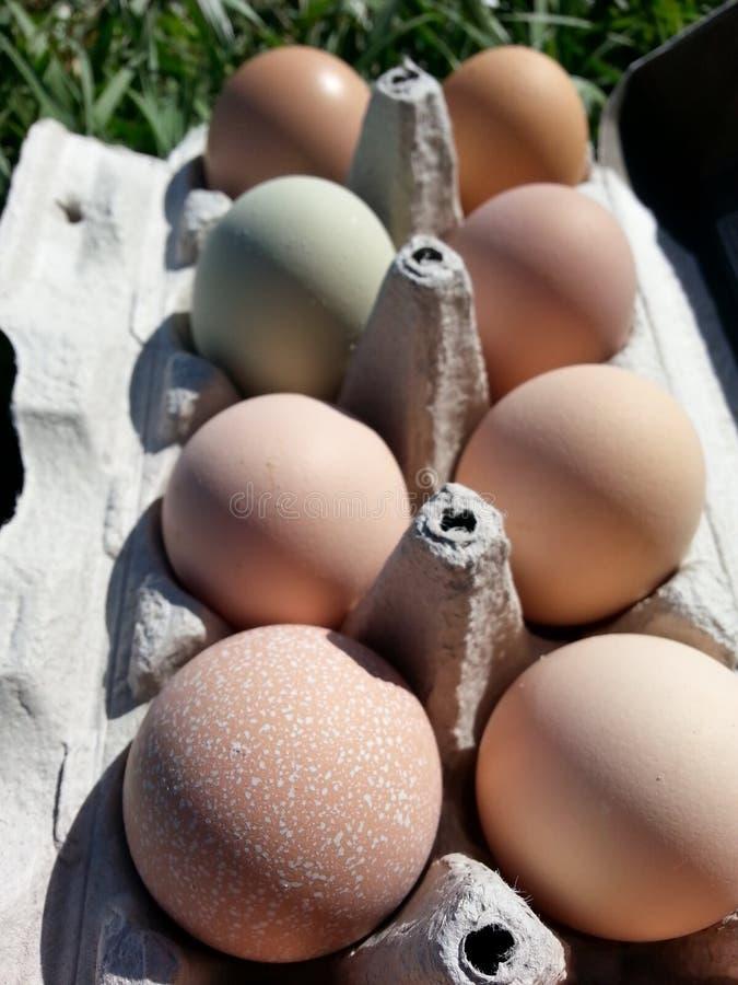Πολυ χρωματισμένα ελεύθερα αυγά σειράς στοκ εικόνες
