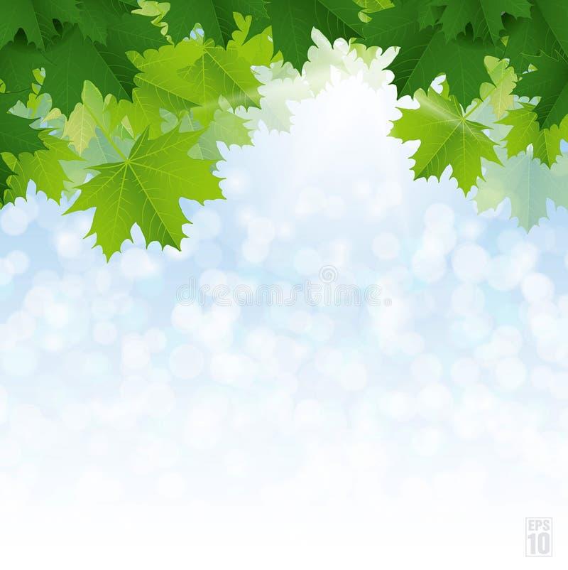 Πολύβλαστα πράσινα φύλλα σφενδάμου ενάντια στο μπλε ουρανό ελεύθερη απεικόνιση δικαιώματος