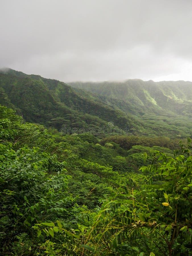 Πολύβλαστη πράσινη κοιλάδα Oahu Χαβάη Manoa στοκ εικόνα με δικαίωμα ελεύθερης χρήσης