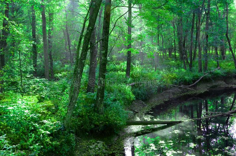 Πολύβλαστο πράσινο δάσος, ακτίνες ήλιων και πρησμένος ποταμός - από Rt 302 Fryeburg, Μαίην - τον Ιούνιο του 2014 - από το Eric Λ  στοκ φωτογραφία με δικαίωμα ελεύθερης χρήσης