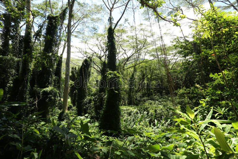 Πολύβλαστο τροπικό δάσος στοκ εικόνες