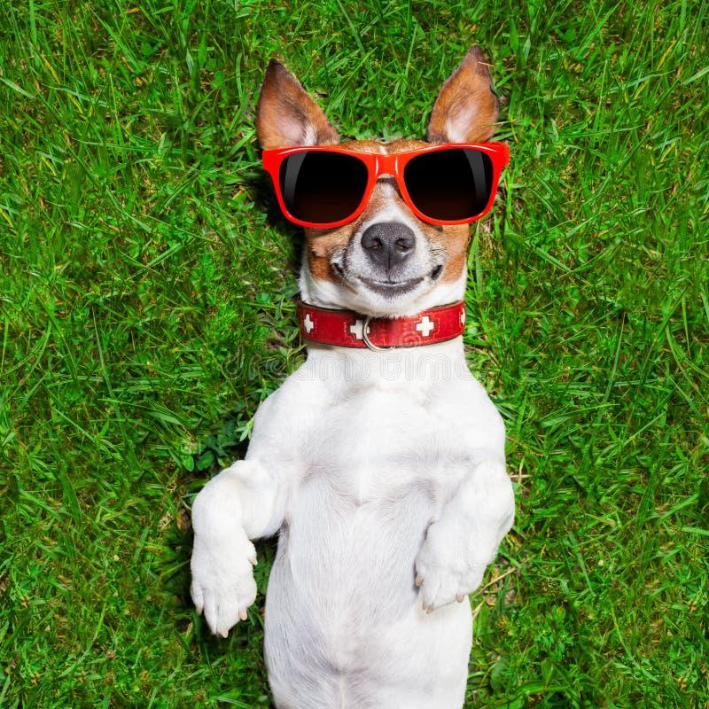 Πολύ αστείο σκυλί στοκ εικόνες