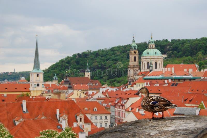 Πράγα αρχιτεκτονική μεσαιωνική στοκ φωτογραφίες με δικαίωμα ελεύθερης χρήσης