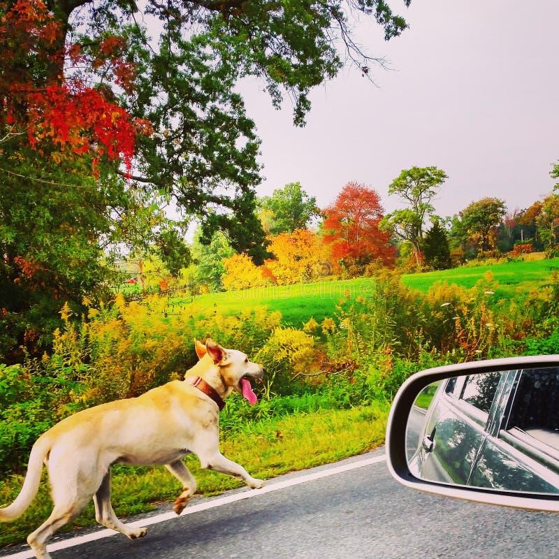 Πράγματα σκυλιών στοκ εικόνα με δικαίωμα ελεύθερης χρήσης