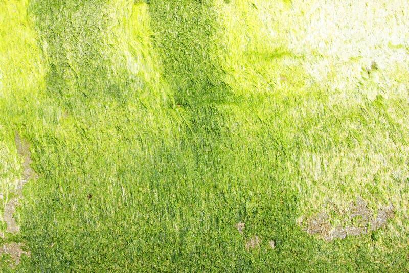 Πράσινα άλγη νέου στοκ εικόνα