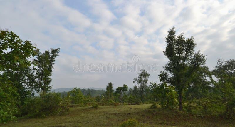Πράσινα δέντρα, μπλε ουρανός και άσπρα σύννεφα χορωδιακοί στοκ εικόνες με δικαίωμα ελεύθερης χρήσης