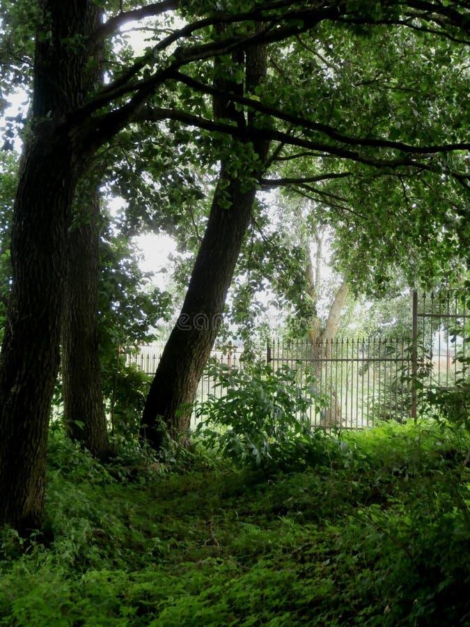 πράσινα δέντρα στοκ φωτογραφίες