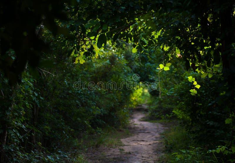 Πράσινα ίχνη στοκ φωτογραφία με δικαίωμα ελεύθερης χρήσης