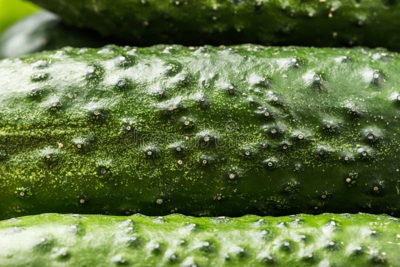 Πράσινα αγγούρια, υπόβαθρο, οργανική κατανάλωση στοκ φωτογραφίες με δικαίωμα ελεύθερης χρήσης