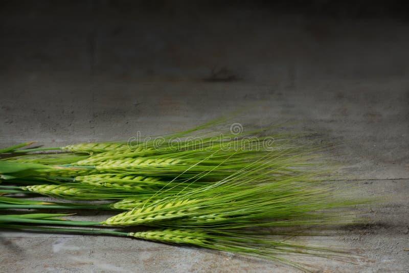 Πράσινα αυτιά κριθαριού στο σκοτεινό αγροτικό ξύλο στοκ φωτογραφίες