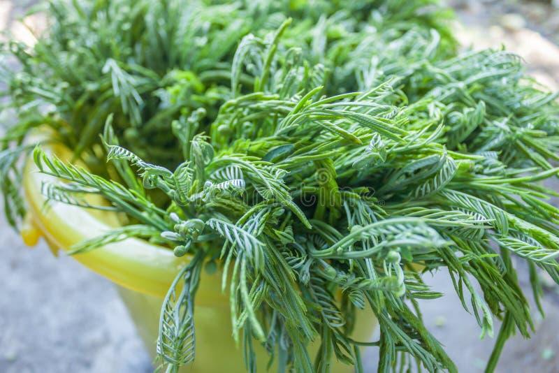 πράσινα λαχανικά στοκ φωτογραφίες με δικαίωμα ελεύθερης χρήσης