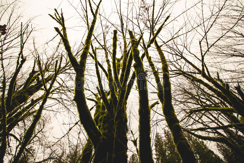 Πράσινα γούνινα δέντρα στοκ φωτογραφία με δικαίωμα ελεύθερης χρήσης
