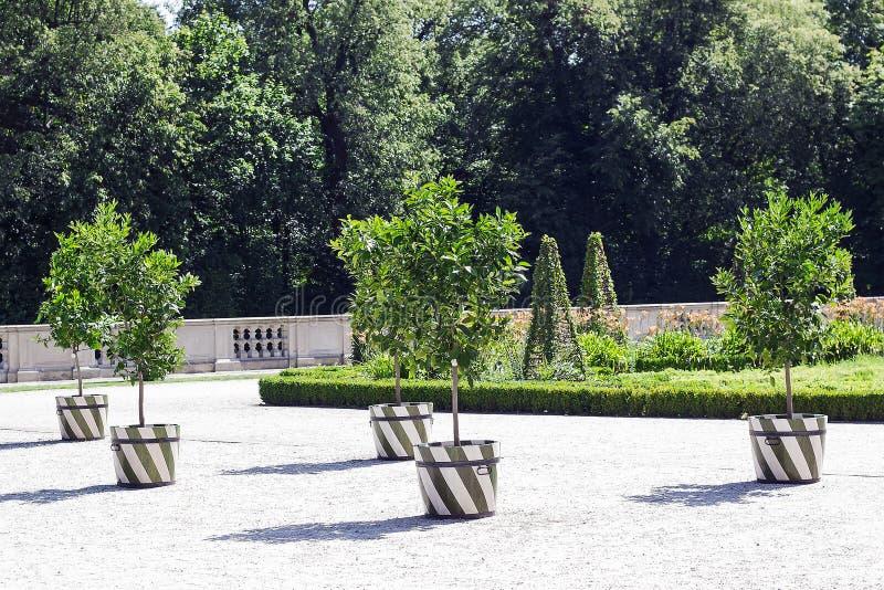 Πράσινα δέντρα ασβέστη μερών με τις ξύλινες σκάφες φρούτων στοκ φωτογραφία