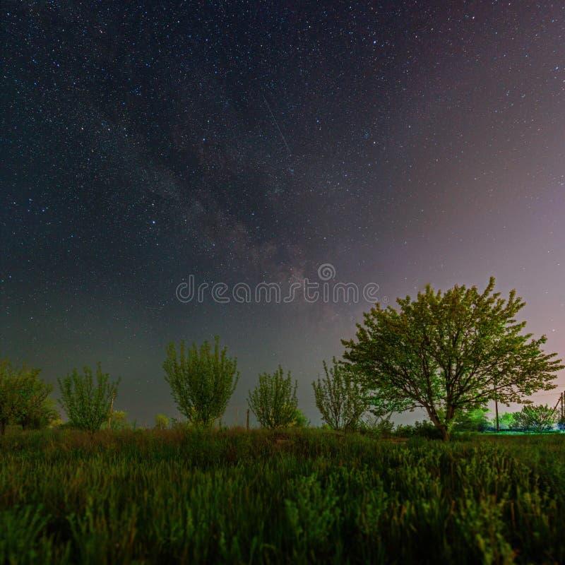Πράσινα δέντρα κάτω από τον έναστρο ουρανό και το γαλακτώδη τρόπο στοκ φωτογραφία με δικαίωμα ελεύθερης χρήσης