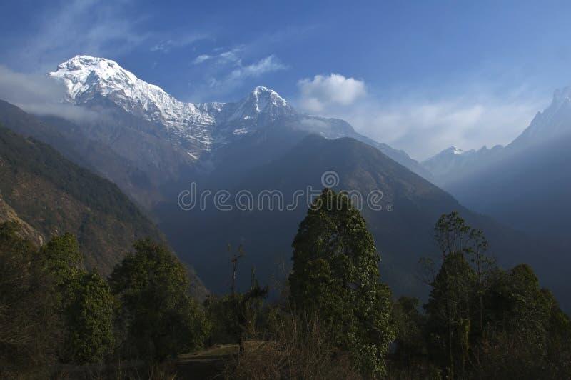 Πράσινα δέντρα και χιονώδη βουνά Να πραγματοποιήσει οδοιπορικό στο στρατόπεδο βάσεων Annapurna στοκ φωτογραφία με δικαίωμα ελεύθερης χρήσης