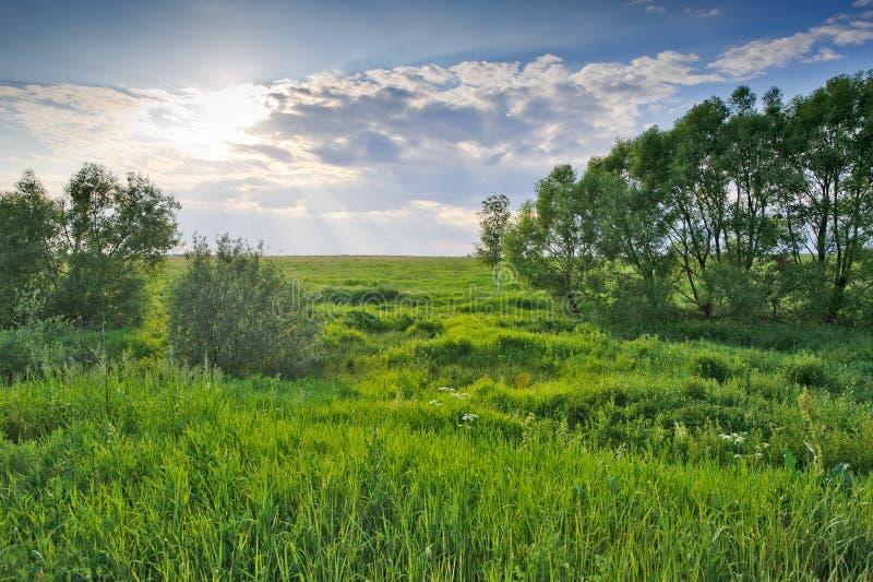Download πράσινα δέντρα λιβαδιών στοκ εικόνες. εικόνα από φύση - 22795372