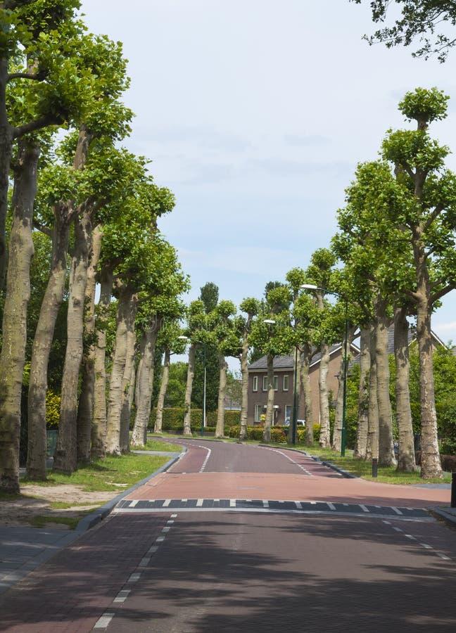Πράσινα δέντρα σε μια του χωριού οδό στην Ολλανδία στοκ εικόνες