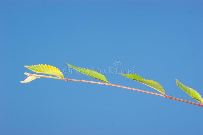 πράσινα δέντρα φύλλων λευ&kapp στοκ εικόνα με δικαίωμα ελεύθερης χρήσης