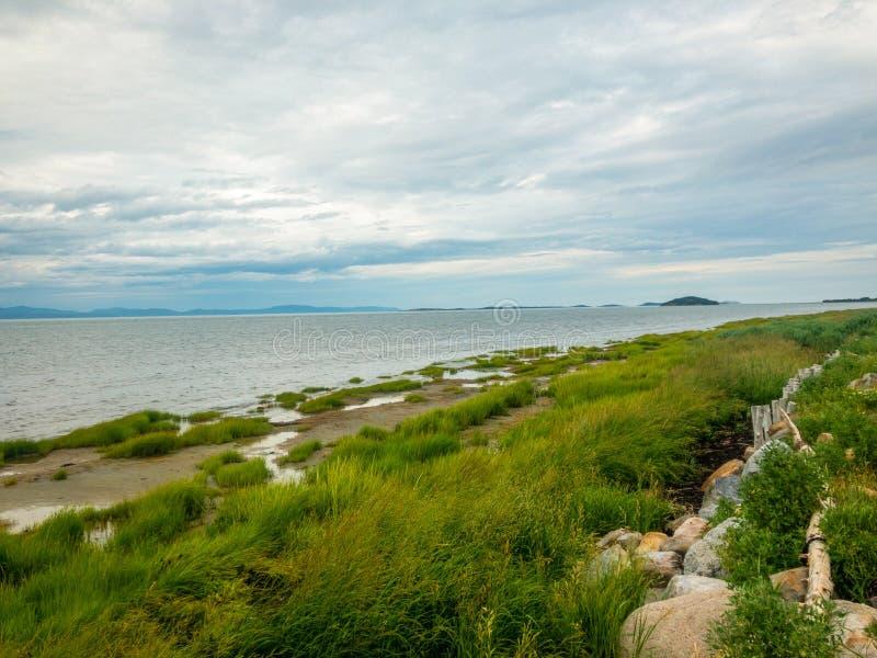 Πράσινα ζιζάνια στην ακτή ποταμών στοκ εικόνες με δικαίωμα ελεύθερης χρήσης