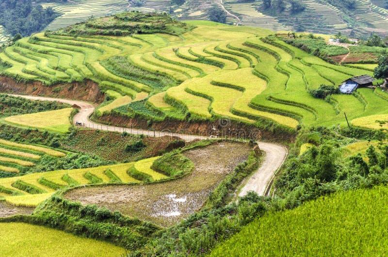 Πράσινα και κίτρινα πεζούλια τομέων ρυζιού στοκ φωτογραφία