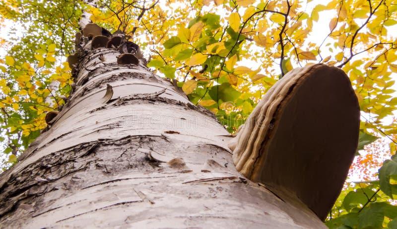 Πράσινα και κίτρινα φύλλα   Φυσικά μανιτάρια στοκ φωτογραφίες με δικαίωμα ελεύθερης χρήσης