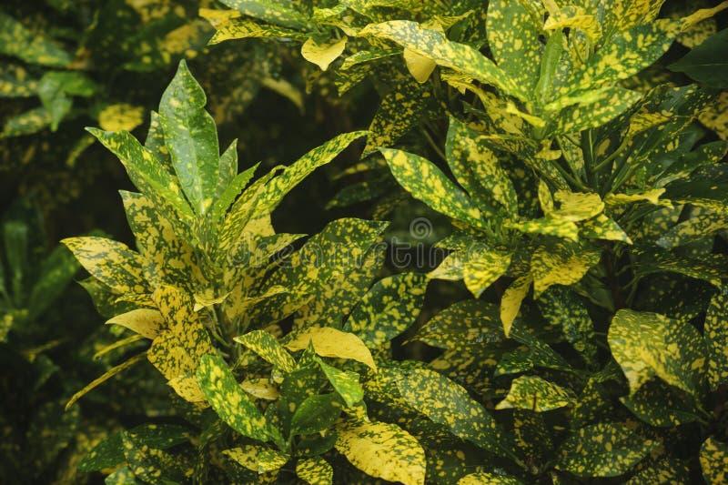 Πράσινα και κίτρινα φύλλα στοκ φωτογραφία