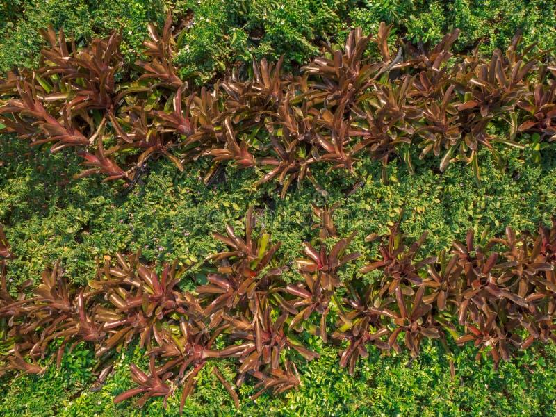 Πράσινα και καφετιά φύλλα στον τοίχο για το υπόβαθρο στοκ φωτογραφία με δικαίωμα ελεύθερης χρήσης