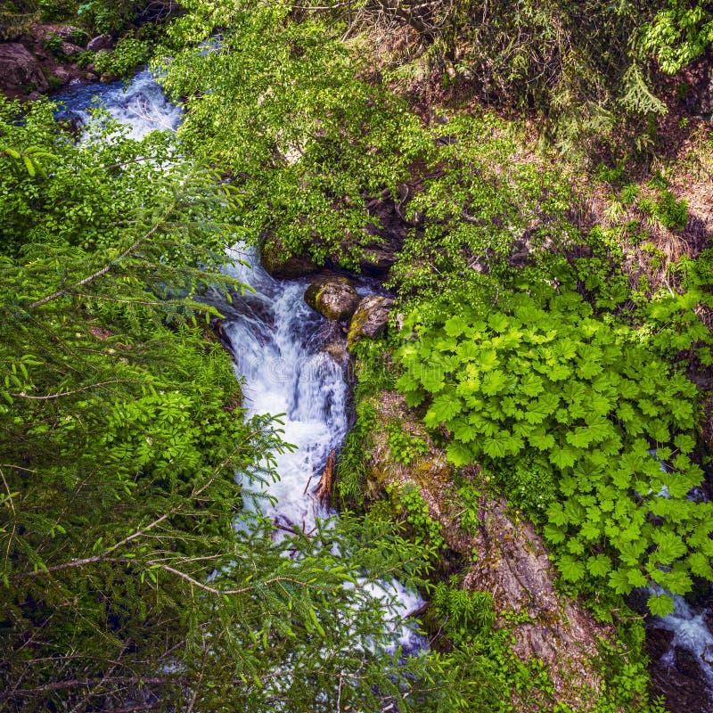 Πράσινα και ρυάκια στοκ εικόνα