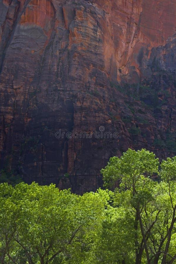 πράσινα κόκκινα δέντρα απότ&omicron στοκ εικόνα με δικαίωμα ελεύθερης χρήσης