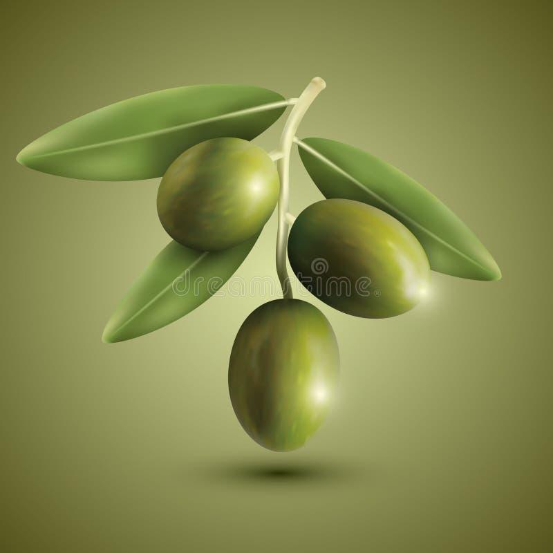 Πράσινα κλαδί ελιάς απεικόνιση αποθεμάτων