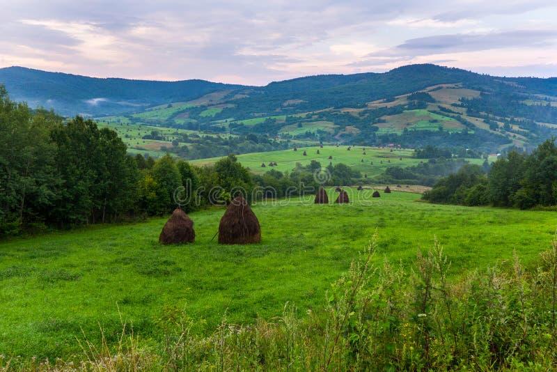 Πράσινα λιβάδια με τον ξηρό σανό που συγκομίζεται για την τροφή για το ζωικό κεφάλαιο το χειμώνα στοκ φωτογραφίες