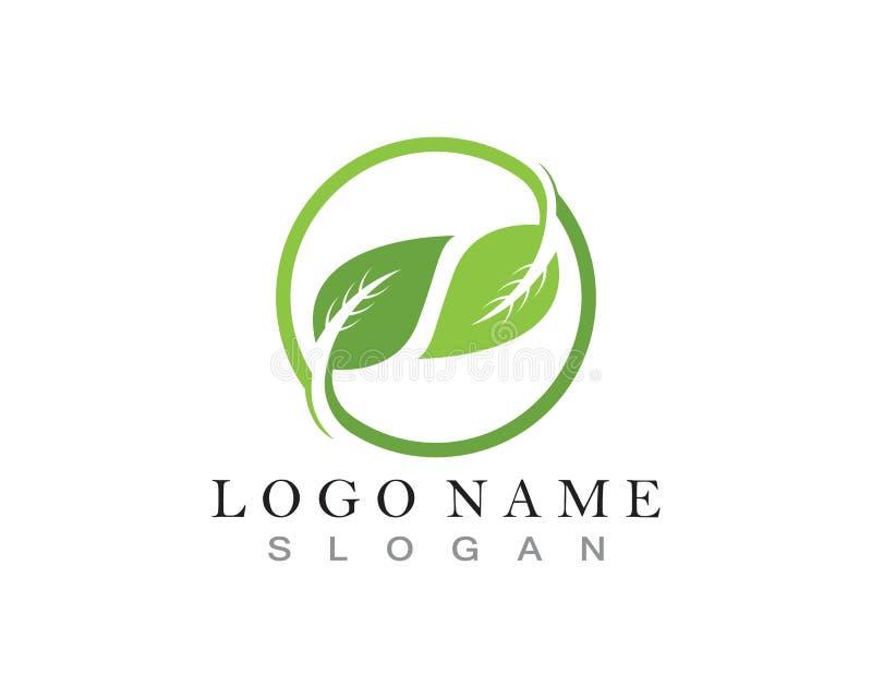 πράσινα λογότυπο φύσης φύλλων και πρότυπο συμβόλων ελεύθερη απεικόνιση δικαιώματος