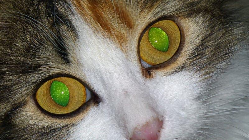 Πράσινα μάτια γατών υπνωτιστικά στοκ φωτογραφία με δικαίωμα ελεύθερης χρήσης