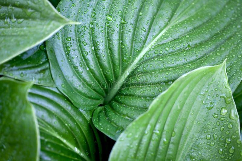 Download πράσινα μεγάλα φύλλα στοκ εικόνες. εικόνα από πράσινος - 22777880