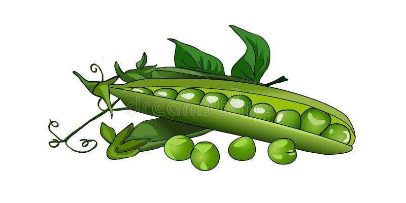 Πράσινα μπιζέλια μπιζελιών σε έναν λοβό Φρέσκα ώριμα μπιζέλια διάνυσμα διανυσματική απεικόνιση