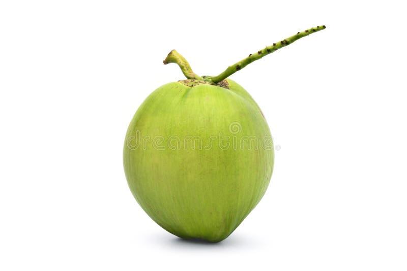 Πράσινα νέα φρούτα καρύδων στοκ εικόνα με δικαίωμα ελεύθερης χρήσης