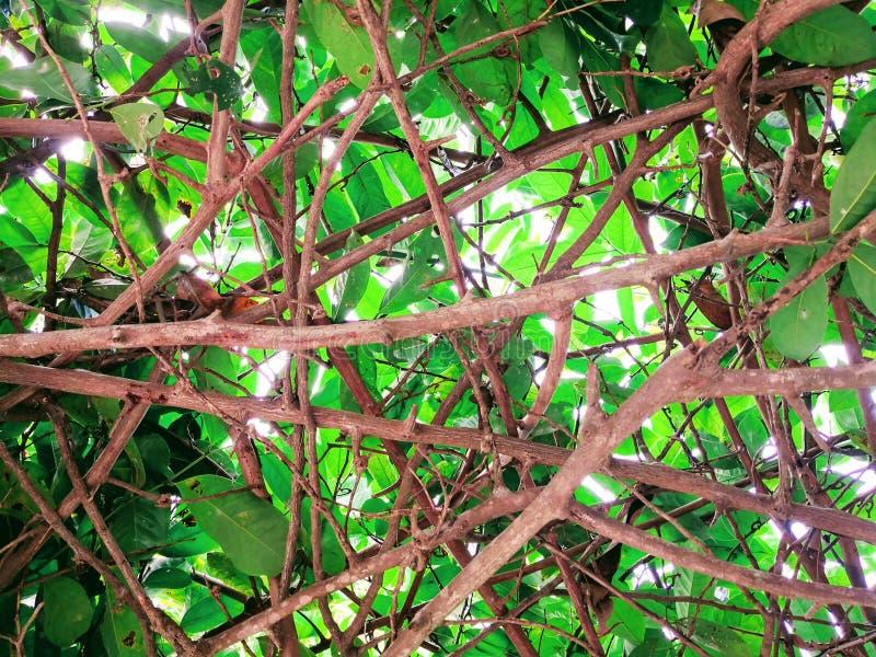 Πράσινα ξύλινα υπόβαθρα φωτός του ήλιου φύσης δασικών δέντρων ραβδιών στοκ εικόνες
