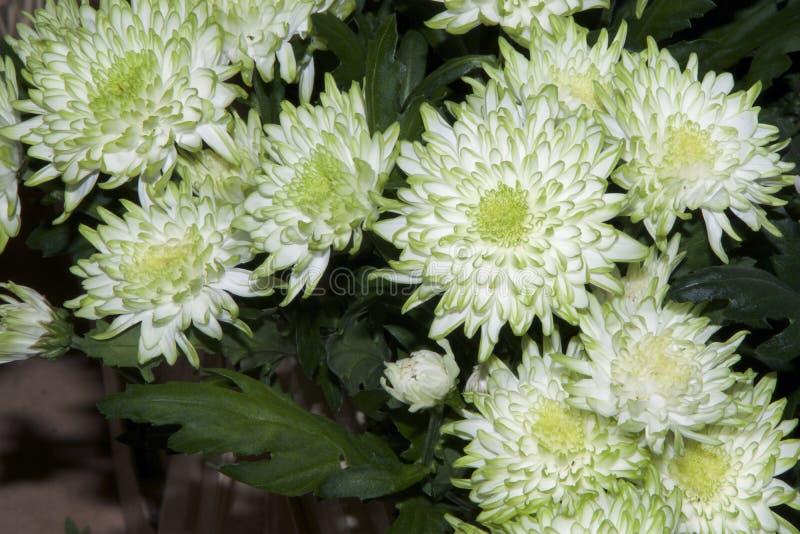 Πράσινα λουλούδια στοκ εικόνα